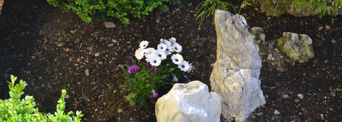 Alpengarten am Lackenhof, Blumen und Sonnen beim Sommerurlaub in Filzmoos